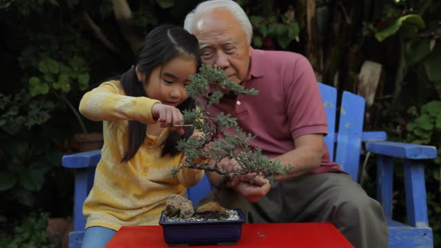 ms grand father and grand daughter (8-9) trimming bonsai tree together / los angeles, california, usa - gärtnern stock-videos und b-roll-filmmaterial