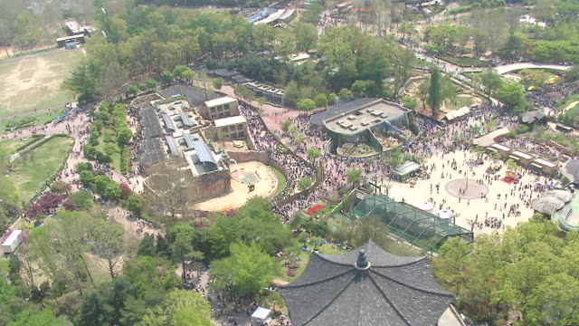 ws ds aerial grand park on childrens day / seoul, south korea - kindertag stock-videos und b-roll-filmmaterial