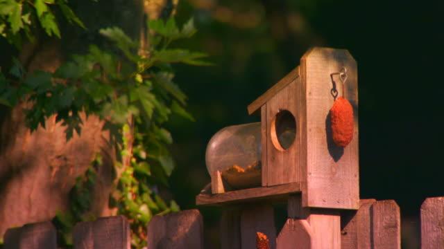 grand rapids, michiganbird feeder, close up - birdhouse stock videos & royalty-free footage