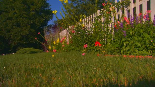 stockvideo's en b-roll-footage met grand rapids, michiganflower garden along fence, low angle - tuinhek