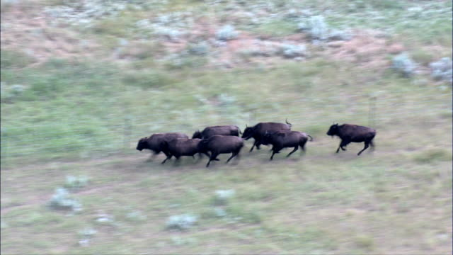 grand river national grassland  - aerial view - south dakota,  perkins county,  united states - american bison stock videos & royalty-free footage