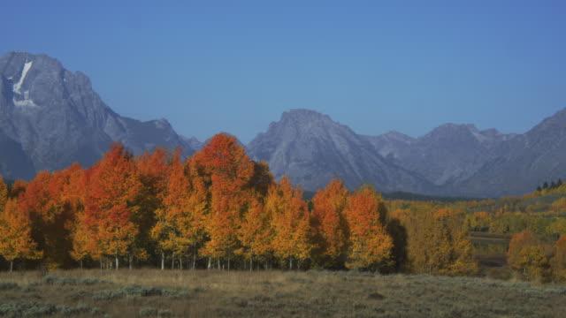 grand teton overlooks a meadow bordered by autumn trees. - grand teton stock-videos und b-roll-filmmaterial