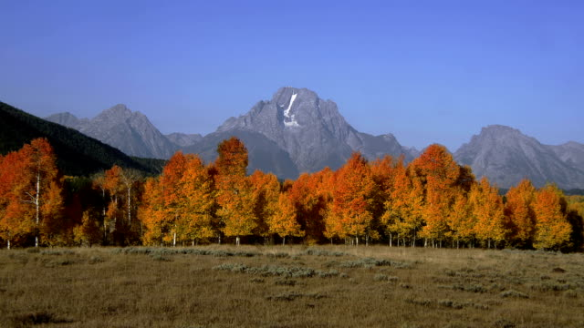 grand teton overlooks a plain bordered by autumn trees. - grand teton stock videos & royalty-free footage