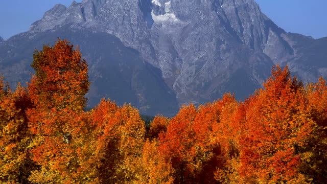 stockvideo's en b-roll-footage met grand teton overlooks autumn-colored trees in grand teton national park. - grand teton