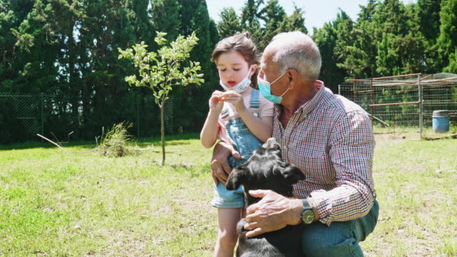 granddaughter and grandfather enjoying with dog at garden during the pandemic - reunion social gathering stock videos & royalty-free footage