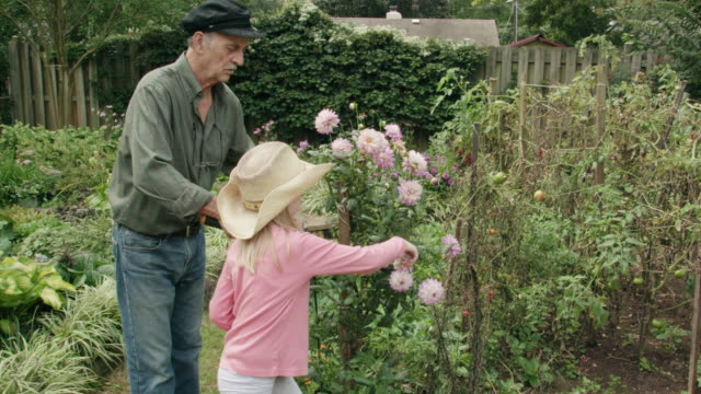 granddaughter helps her grandfather to pruning in his garden - pruning stock videos & royalty-free footage