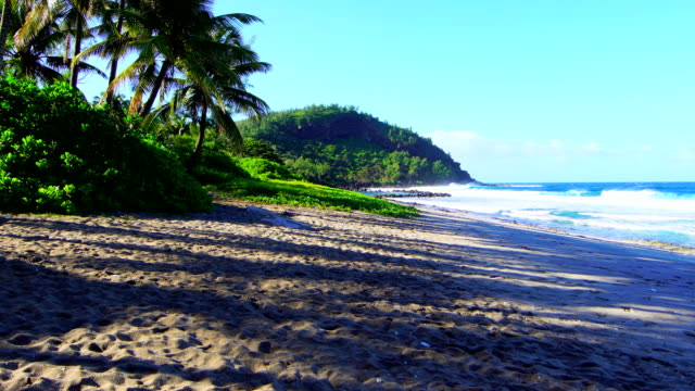 Grande Anse beach with palm trees - Reunion Island