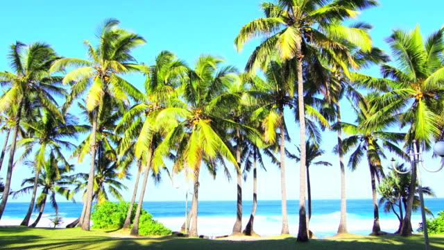 vídeos de stock, filmes e b-roll de palmeiras de grande anse na manhã - ilha da reunião - ilha da reunião