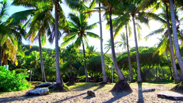 grande anse palm trees on morning - reunion island - réunion french overseas territory stock videos & royalty-free footage
