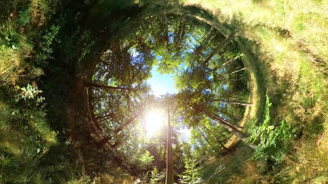 vídeos de stock e filmes b-roll de 360 grander forest - panorama equiretangular
