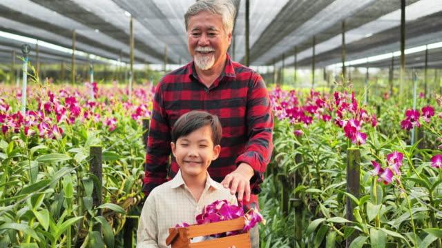 vidéos et rushes de grand-père et petit-enfant appréciant dans le jardin avec des fleurs d'orchidée. - jardiner