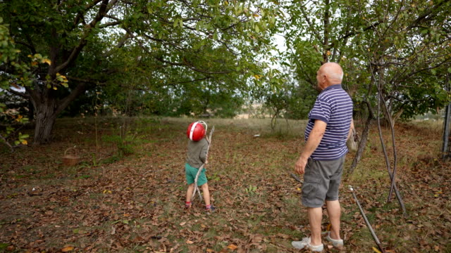 grandfather and grandson harvesting walnuts - helmet stock videos & royalty-free footage