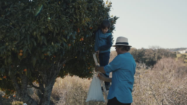 grandfather and grandson picking mandarins together - ladder stock videos & royalty-free footage