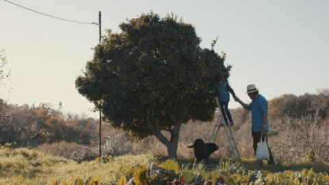vídeos y material grabado en eventos de stock de grandfather and grandson picking mandarins together with dog - vida sencilla