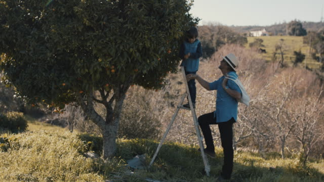 grandfather and grandson picking mandarins together with dog - großvater stock-videos und b-roll-filmmaterial