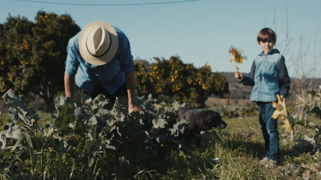 Grandfather and grandson taking care of broccoli plants with dog