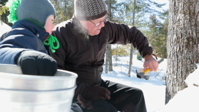 grandfather and grandson tapping maple tree for maple syrup - maple syrup stock videos & royalty-free footage