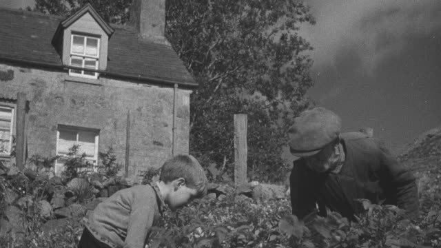 1944 montage grandfather and grandson tilling field behind brick house in highlands / achriesgill, scotland, united kingdom - achriesgill stock videos and b-roll footage