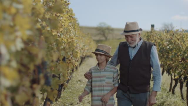 vídeos de stock e filmes b-roll de grandfather and grandson walking through vineyard - vinha