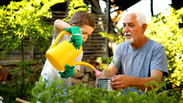 grandfather gardening with his grandson - grandchild stock videos & royalty-free footage