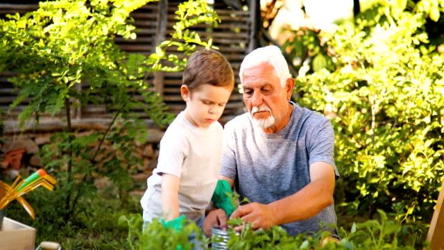 vidéos et rushes de grand-père de jardinage avec son petit-fils - jardin potager