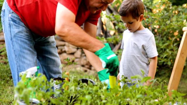 vídeos de stock, filmes e b-roll de avô com seu neto de jardinagem - vegetable garden