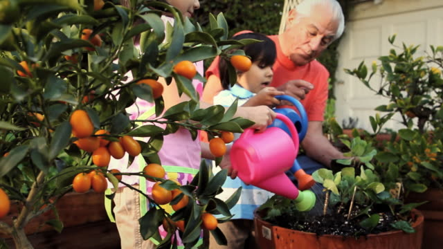 ms pan grandfather showing his grandchildren to water plants / los angeles, california, usa - pot plant stock videos & royalty-free footage