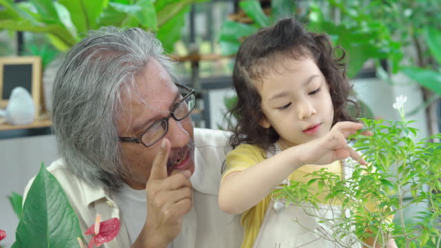 grandfather teaching child about biology , growing plant at home , homeschooling concept - genderblend stock videos & royalty-free footage
