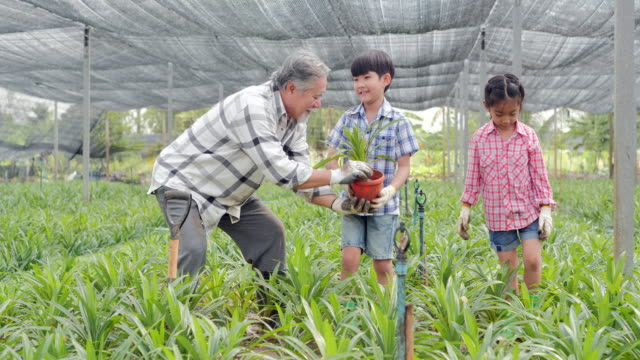 vidéos et rushes de grand-père avec des enfants plantant l'arbre à feuilles persistantes dans le garden.farming, jardinage, agriculture, récolte, personnes, éducation, agriculture organique, soin de plante et concept de protection, concept de ressort. - jardin potager