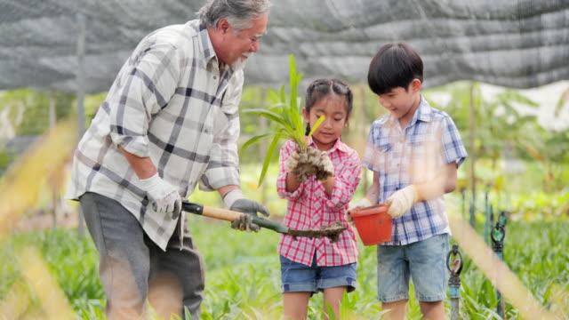庭に常緑樹を植える子供を持つ祖父.農業、ガーデニング、農業、収穫、人、教育、有機農業、植物のケアと保護の概念、春の概念。 - ガーデニング点の映像素材/bロール