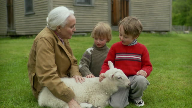 ms grandmother and grandchildren (2-7) sitting with lamb on grass / stowe, vermont, usa - tier familie stock-videos und b-roll-filmmaterial