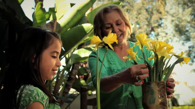 ms grandmother and granddaughter (2-3) arranging yellow daffodils / los angeles, california, usa - vase stock videos & royalty-free footage
