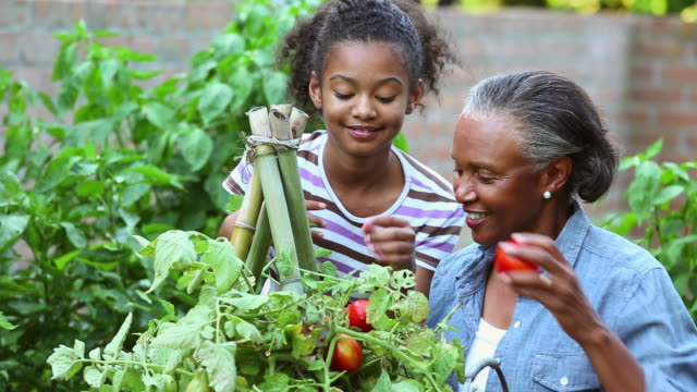 MS TU Grandmother and Granddaughter Harvesting Tomatoes from Home Garden / Richmond, Virginia, USA