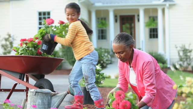 ms grandmother and granddaughter (8-9) planting zinnia flowers in front of home, richmond, virginia, usa - granddaughter stock videos & royalty-free footage