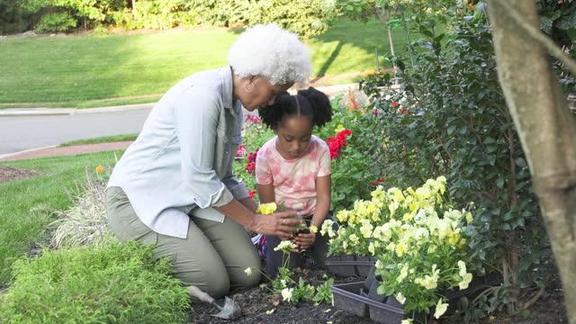 grandmother gardening with grandchild - domestic garden stock videos & royalty-free footage