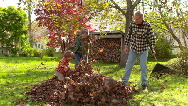 ws slo mo ds grandmother grandfather grandson and granddaughter playing in pile of leaves / tivoli, new york, united states - herbst stock-videos und b-roll-filmmaterial