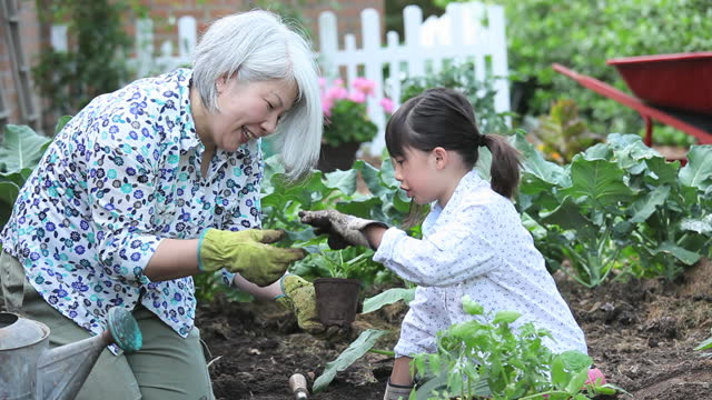 grandmother teaching granddaughter to plant cucumbers in vegetable garden - 祖母点の映像素材/bロール