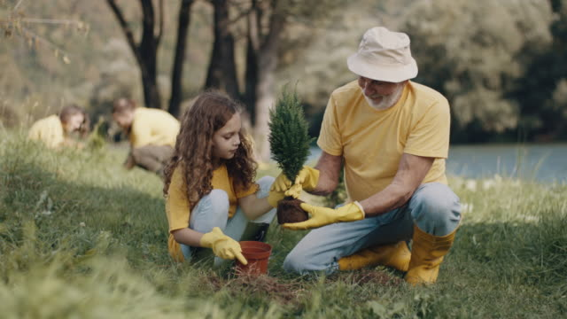 grandpa and little girl planting a tree - yellow stock videos & royalty-free footage