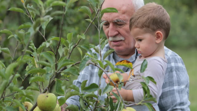 grandpa and me - apple fruit stock videos & royalty-free footage