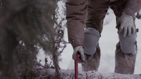 stockvideo's en b-roll-footage met grandparents cutting christmas tree with grandson in snow in usa. - kerstboom