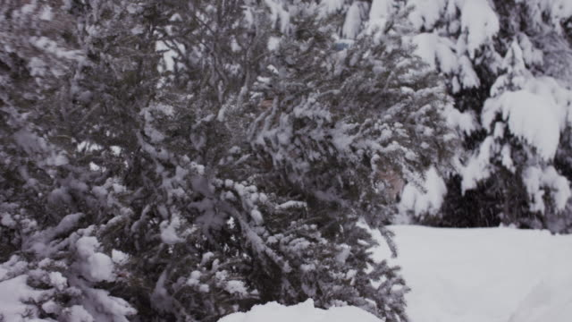 grandparents cutting christmas tree with grandson in snow in usa. - weihnachtsbaum stock-videos und b-roll-filmmaterial