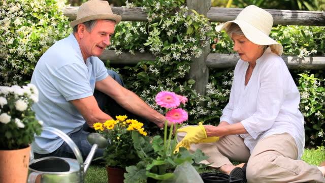 vidéos et rushes de grandparents doing some gardening / cape town, western cape, south africa - gant de jardinage