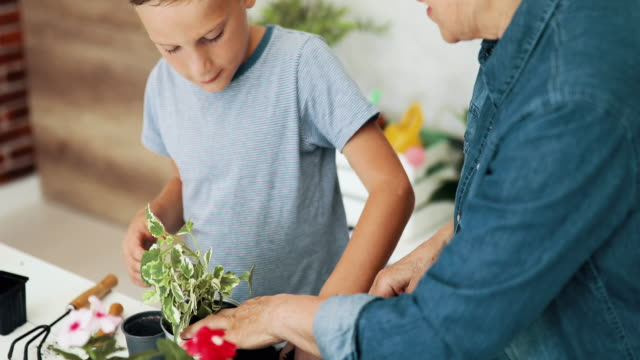 enkel hilft oma beim pflanzen - großeltern stock-videos und b-roll-filmmaterial