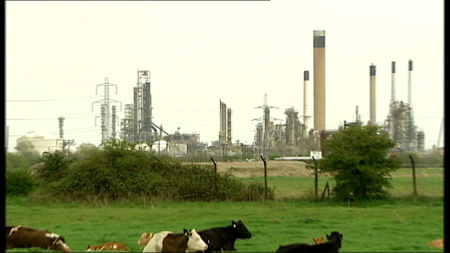 thurrock coryton refinery ext coryton refinery with cows in field in foreground - thurrock stock videos and b-roll footage