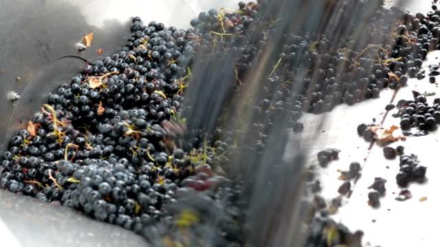 vidéos et rushes de raisin crusher - presser