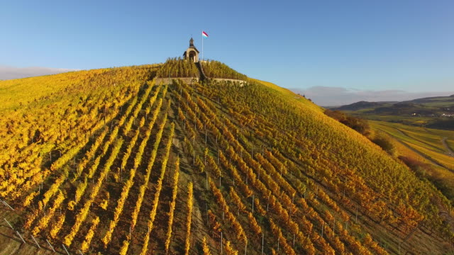 "vidéos et rushes de grape harvest at vineyard ""koeppchen"", wormeldange, moselle valley, luxembourg - grand duché du luxembourg"