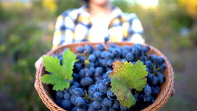 vídeos y material grabado en eventos de stock de cosechadora de uva en viñedo - hoja de la vid