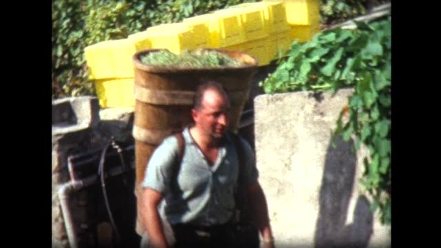 1966 grape harvesting by hand near Lake Geneva