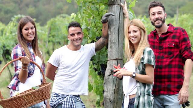 vidéos et rushes de vendanges pour la vinification : vendemmie italienne en toscane - récolter