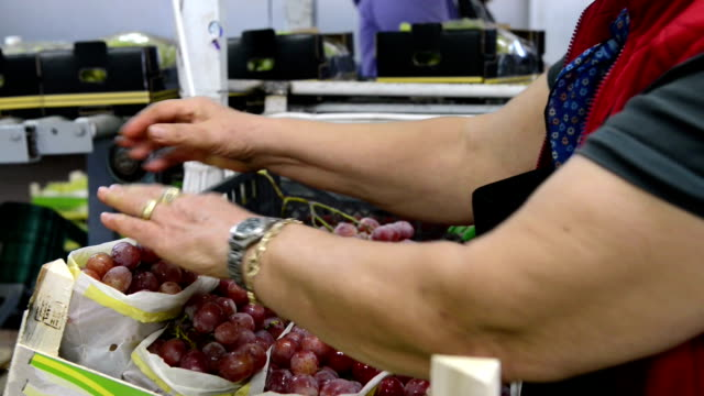 grape packaging process - packaging stock videos & royalty-free footage